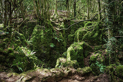 Photograph - Moss Covered by Christopher Rees