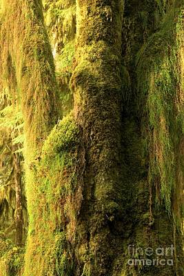 Photograph - Moss Covered In The Hoh by Adam Jewell