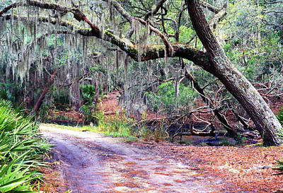 Music Royalty-Free and Rights-Managed Images - Moss Covered Live Oak by Thomas R Fletcher
