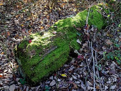 Photograph - Moss Covered Log by Ed Weidman