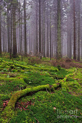 Pine Cones Photograph - Moss Covered Log In Misty Forest by Richard Thomas