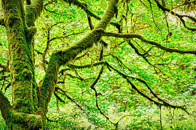 Photograph - Moss Covered Maple  by Stuart Litoff