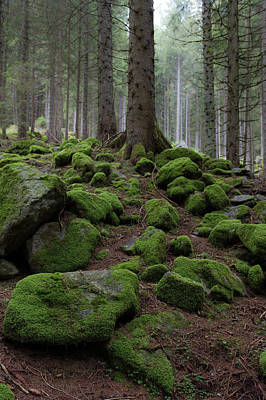 Photograph - Moss Covered Rocks by Wim Slootweg