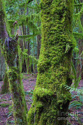 Photograph - Moss Covered Tree 2 by Donna L Munro