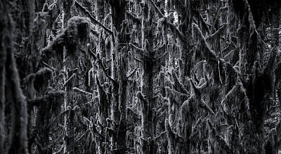 Moss Covered Trees Black And White Art Print
