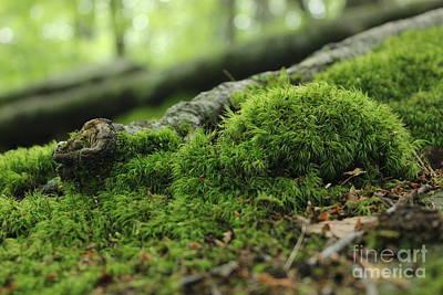 Photograph - Moss by E B Schmidt