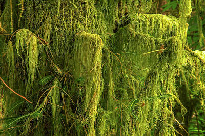 Photograph - Moss Envy by Bill Posner