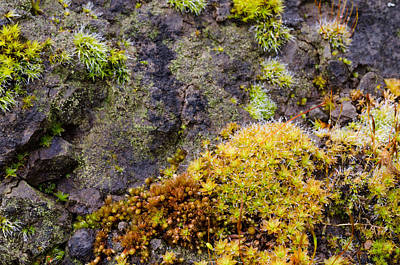 Photograph - Moss Garden by Margaret Pitcher