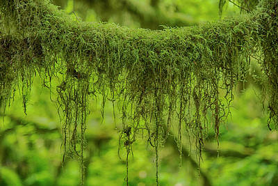 Wood Necklace Photograph - Moss Garland by Stephen Stookey