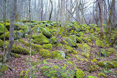 Photograph - Moss - Gatlinburg by Lindsey Weimer