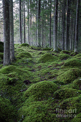 Photograph - Moss-grown Rocks In A Coniferous Forest by Kennerth and Birgitta Kullman