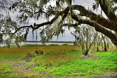 Photograph - Moss Hangs Heavy by Florene Welebny