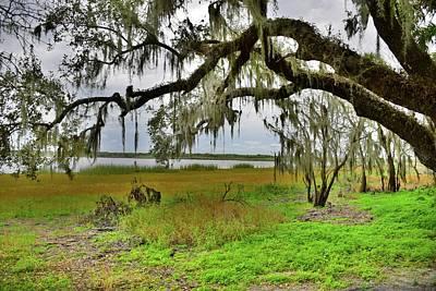 Photograph - Moss Hangs Heavy by Florene Welebny