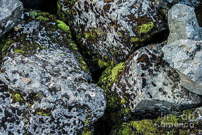 Photograph - Moss by Mary-Lee Sanders
