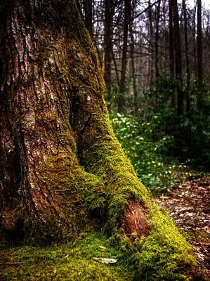 Photograph - Moss On A Tree by Greg Mimbs