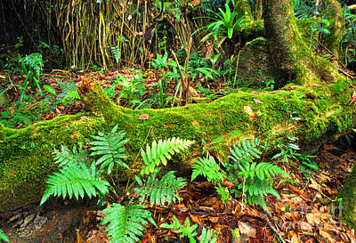Moss On Fallen Tree And Ferns Art Print