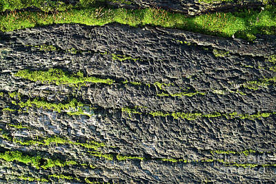Photograph - Moss On Old Rotten Wood by Giovanni Malfitano