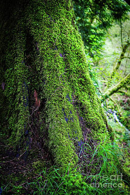 Photograph - Moss On Tree by Jon Burch Photography