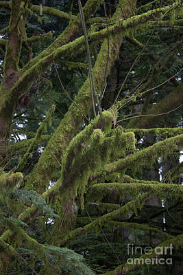 Photograph - Moss On Trees by Donna L Munro