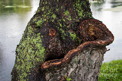 Photograph - Moss On Trunk by Grace Grogan