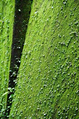 Moss Art Print by Pramod Bansode