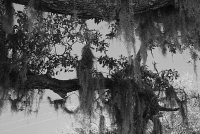 Photograph - Moss by Renee Holder
