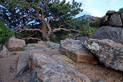 Moss Rocks And A Tree Art Print by James Steele