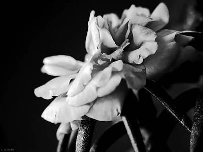 Photograph - Moss Rose I by Lauren Radke