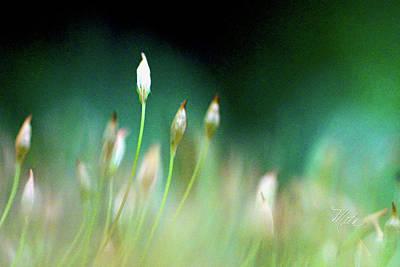 Photograph - Moss Spores by Meta Gatschenberger