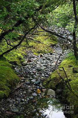 Photograph - Moss Stream by Alycia Christine