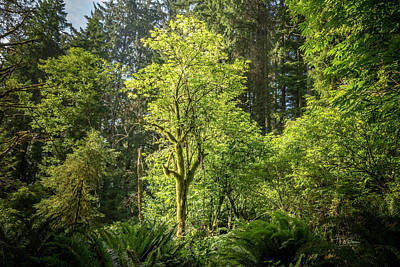 Photograph - Moss Tree by Bill Posner