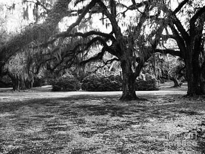 Photograph - Moss Trees Black And White by Robin Lewis