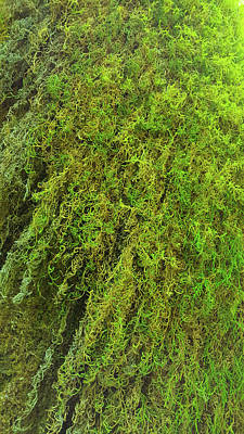 Olympic National Park Digital Art - Mosses  by Art Spectrum