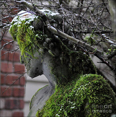 Photograph - Mossy Bacchus by Tanya Searcy