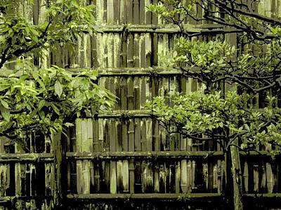Bamboo Fence Photograph - Mossy Bamboo Fence - Digital Art by Carol Groenen
