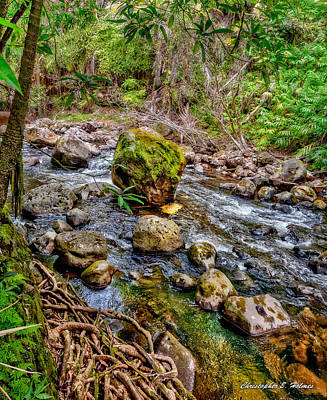 Photograph - Mossy Boulder by Christopher Holmes