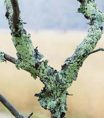 Photograph - Mossy Branch by Fran Riley