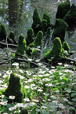 Cypress Knees Photograph - Mossy Congregation II by Suzanne Gaff