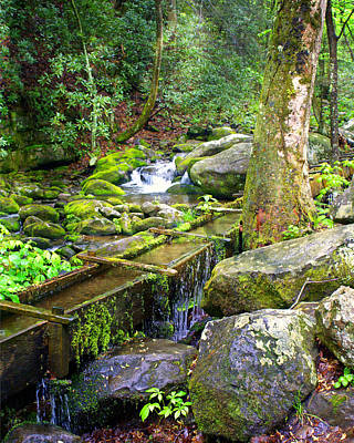 Photograph - Mossy Creek by Marty Koch