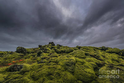 Photograph - Mossy Eruption  by Michael Ver Sprill