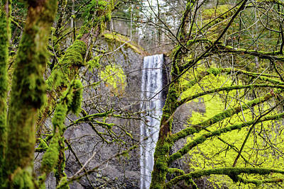 Photograph - Mossy Falls by Michael Scott