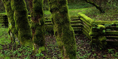 Mossy Fence Print by Bob Christopher