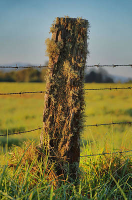 Photograph - Mossy Fence Post by Pamela Walton