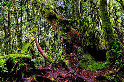 Photograph - Mossy Forest by Fabrizio Troiani