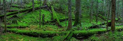 Photograph - Mossy Montana Forest by Robert Hosea