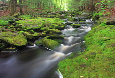 Photograph - Mossy Forest Stream by John Burk