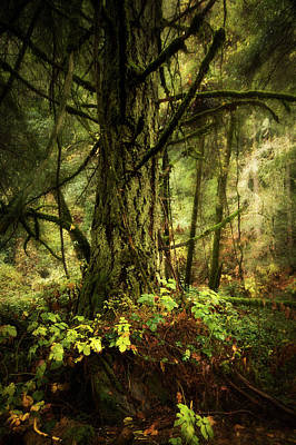 Photograph - Mossy Forest - Tiger Creek by Eleanor Caputo