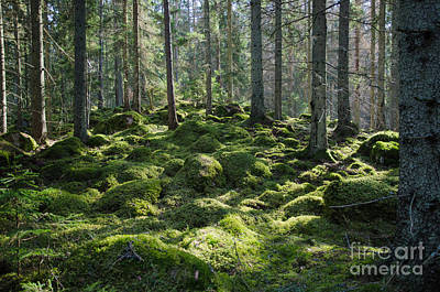 Photograph - Mossy Green Forest by Kennerth and Birgitta Kullman