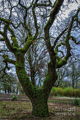 Clearlake Photograph - Mossy Green by Mitch Shindelbower