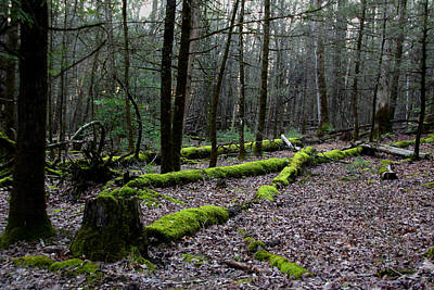 Photograph - Mossy by Kevin Myers